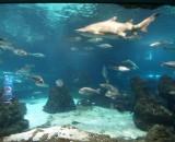 Aquarium in Barcelona