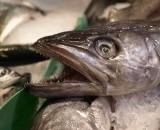 ... und nochmals Fisch...
